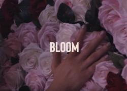 DUELLE – Bloom